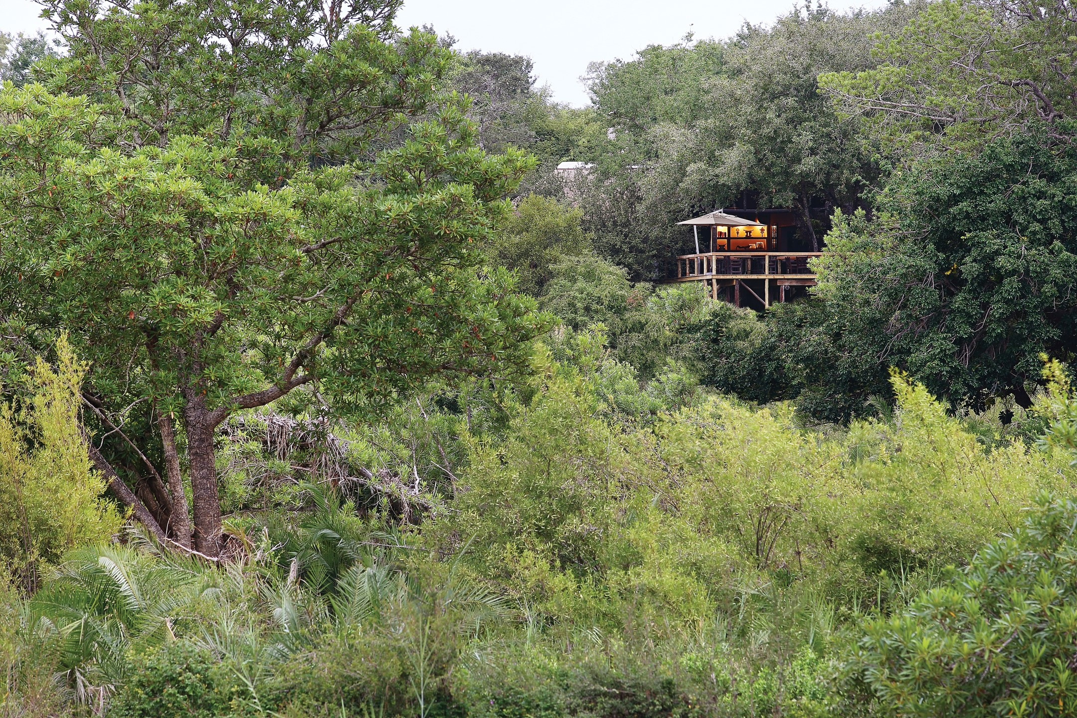Londolozi Tree Camp from below