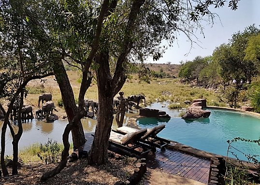 Elephants at Lukimbi pool