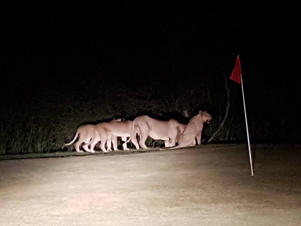 Skukuza golf course at night