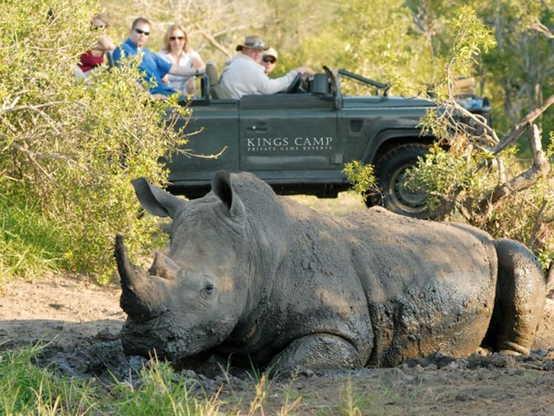 Rhino at Kings Camp