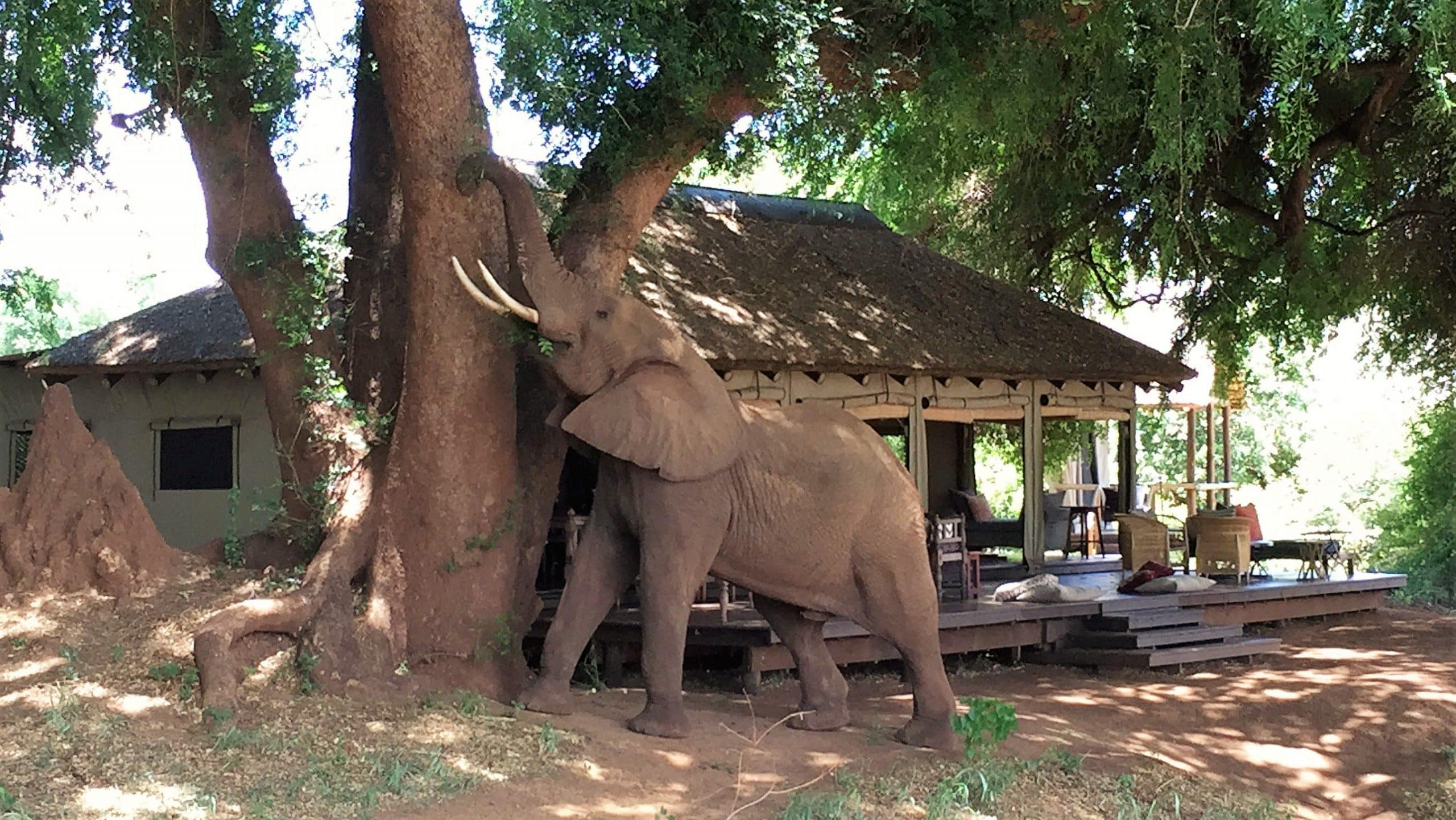 Elephant scratching at Luvuvhu River Camp