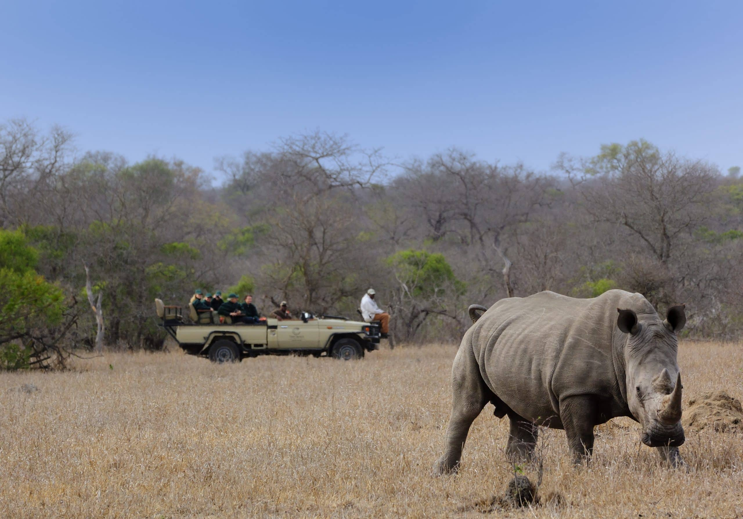 Rhino on Manyeleti plains at Tintswalo