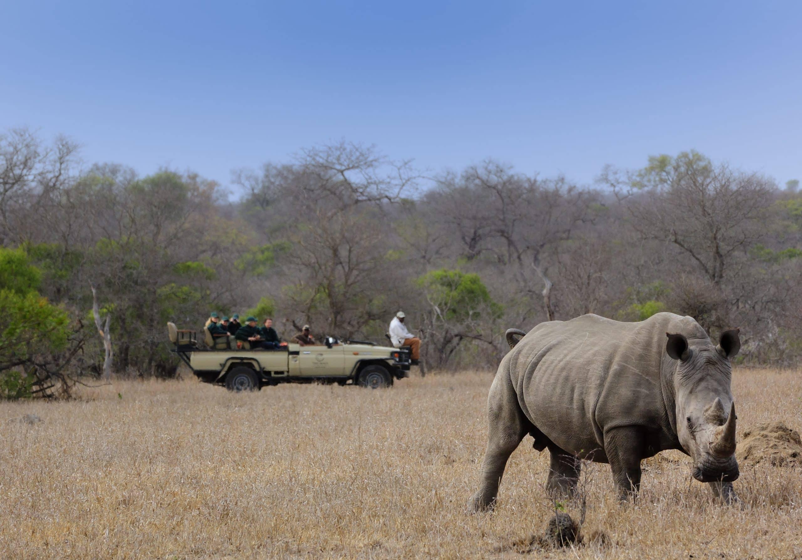 Rhino on Manyeleti plains at Tintswalo