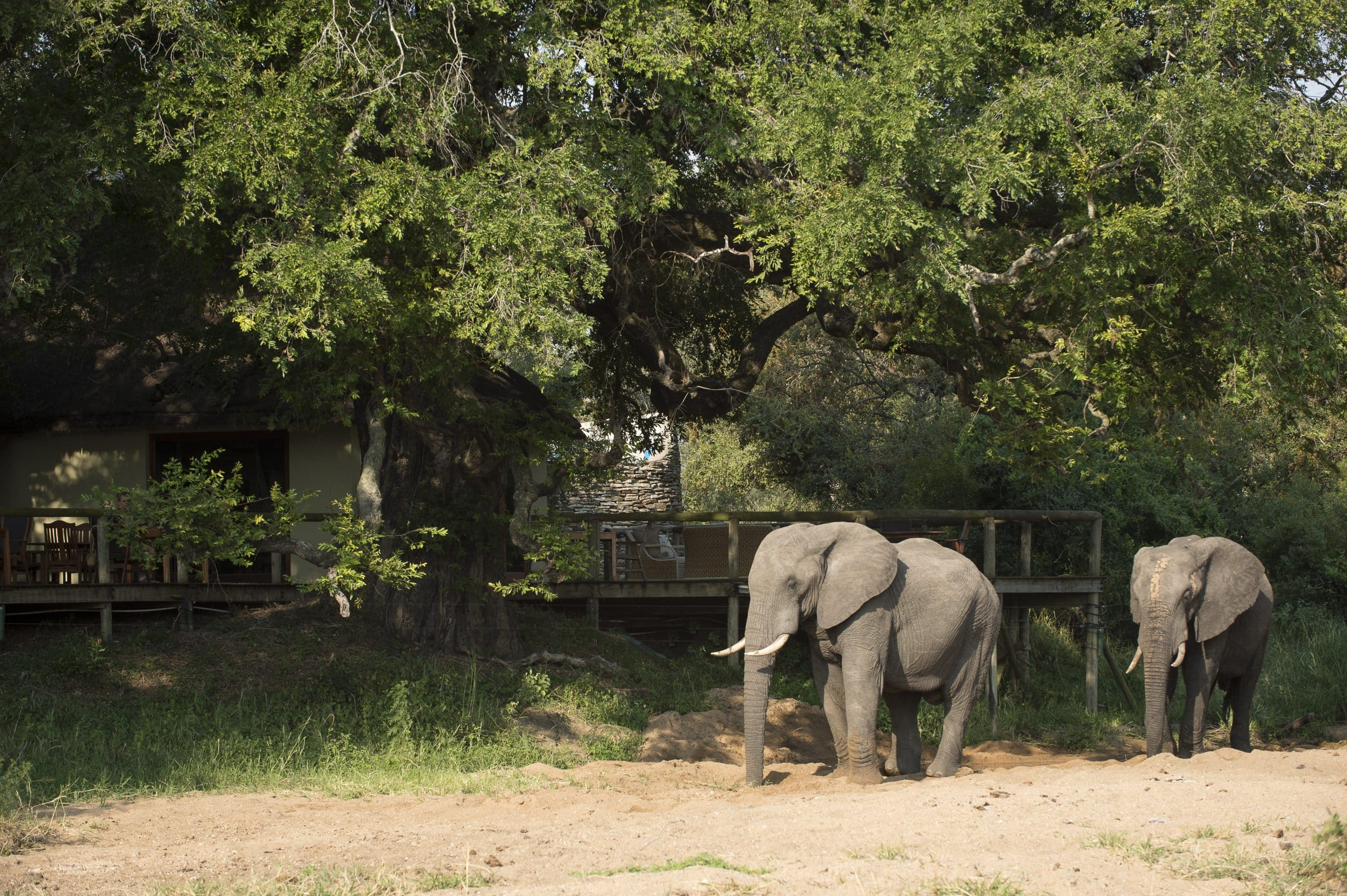 Elephant at Tintswalo Safari Lodge