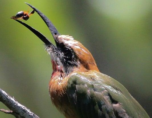 Birding at Kapama Karula