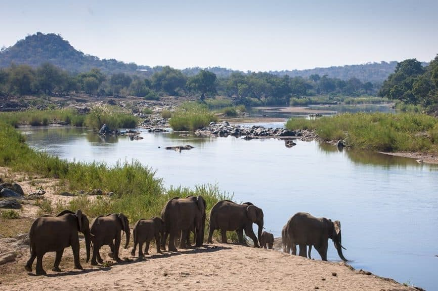 Elephants at Olifants River, Balule