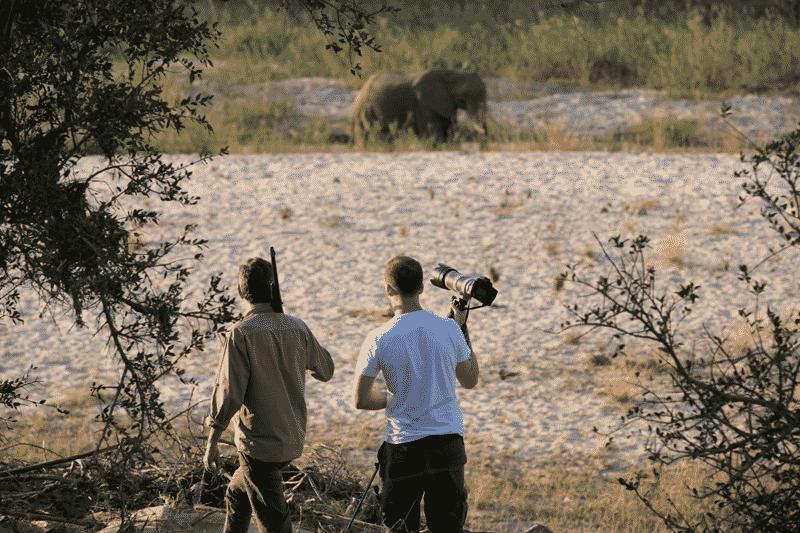 Elephant on walk at nDzuti