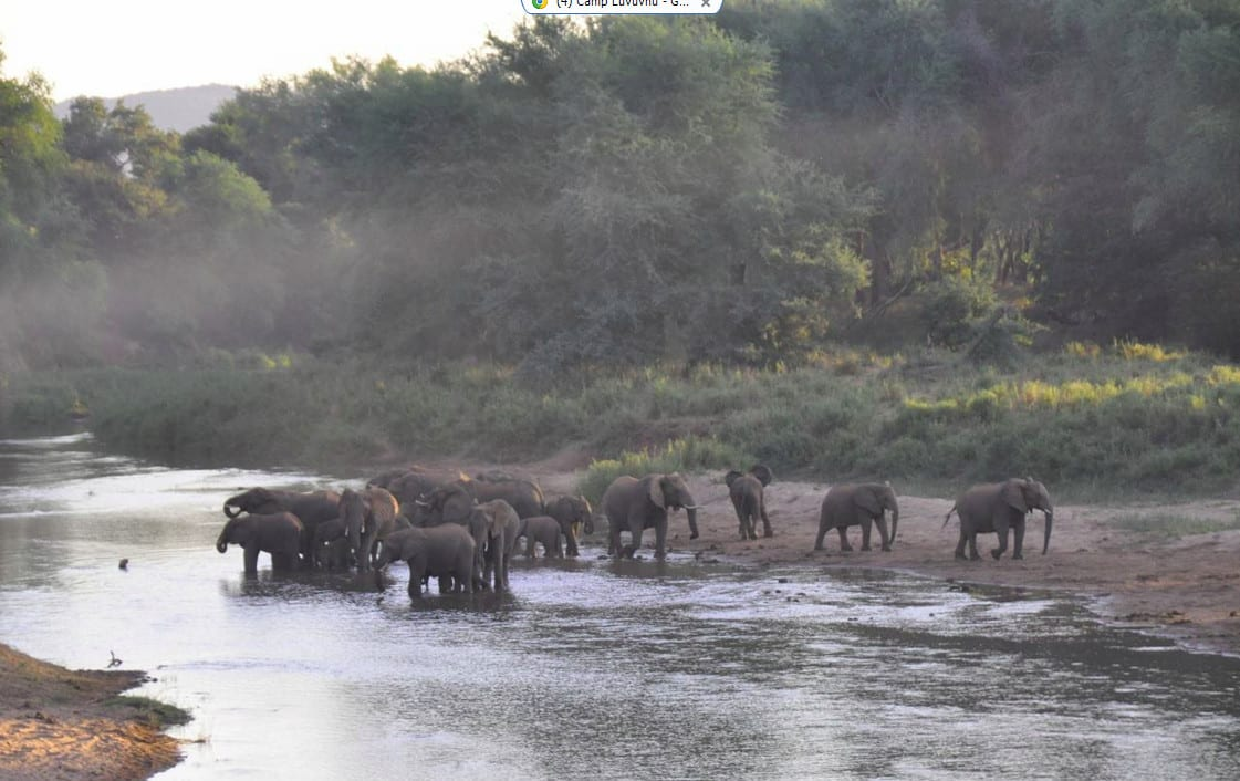 Elephant at Pafuri River Camp
