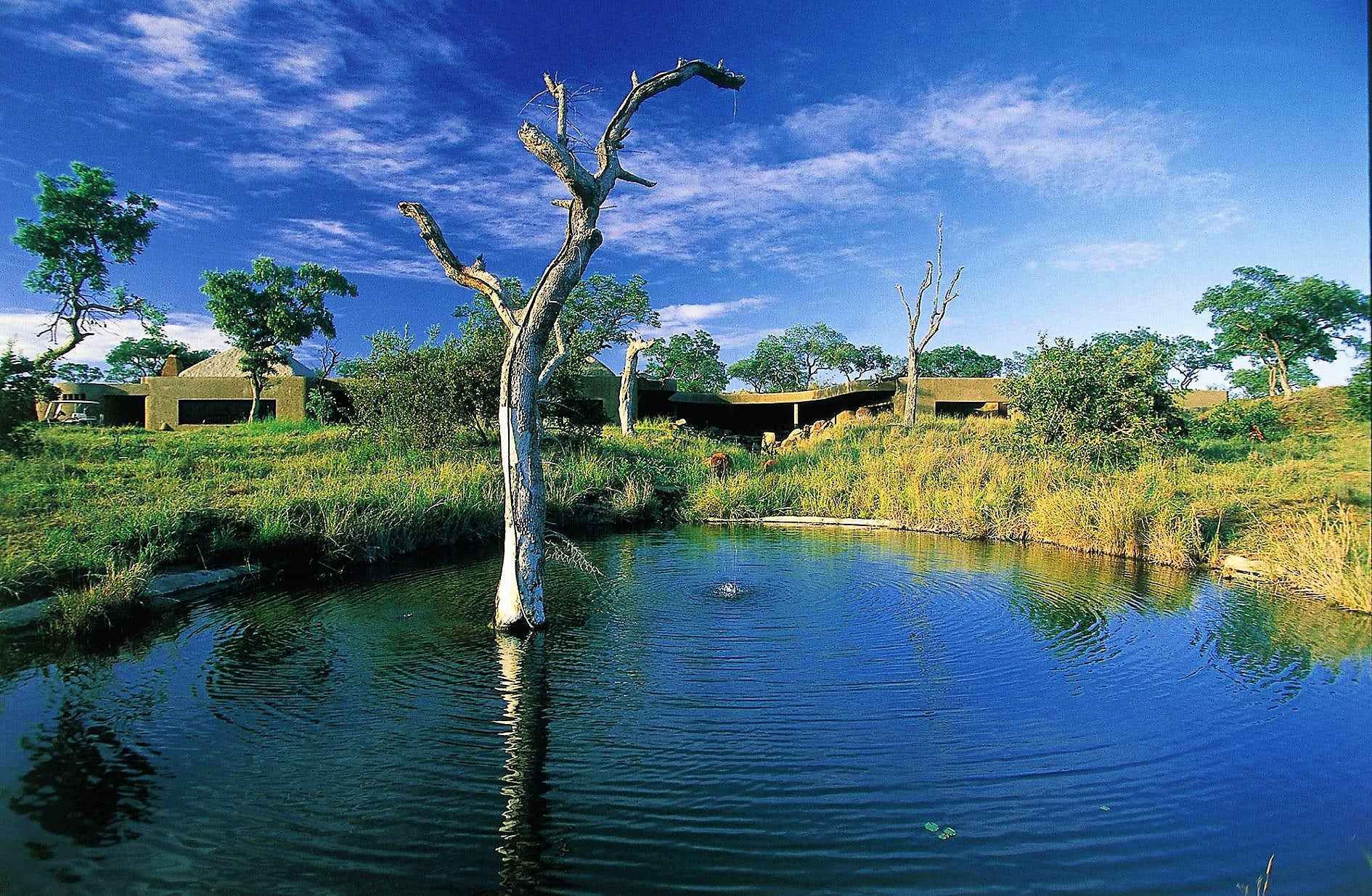 Sabi Sabi Earth Lodge and waterhole
