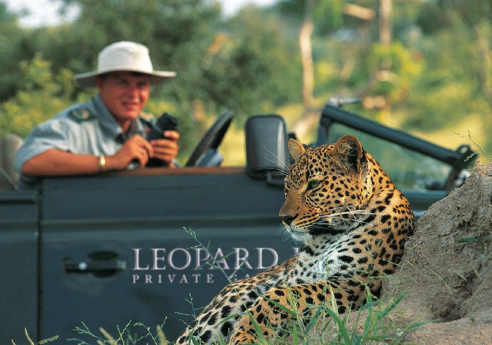 Leopard on drive at Leopard Hills