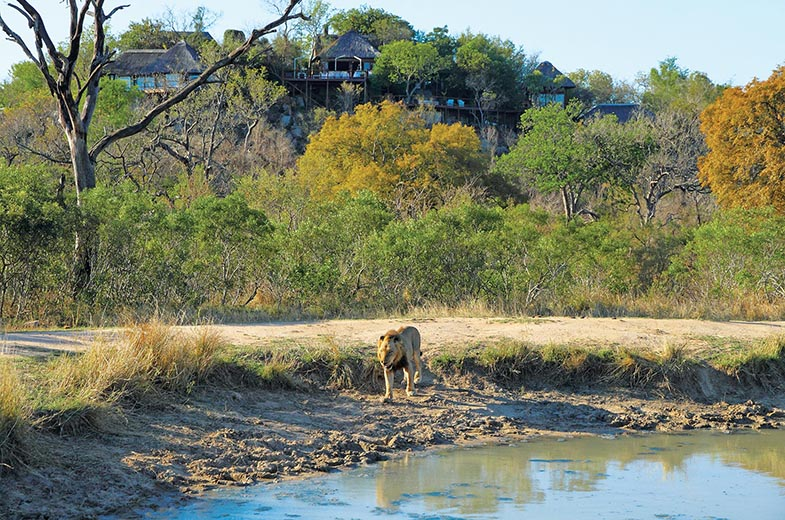 Lion at Leopard Hills waterhole