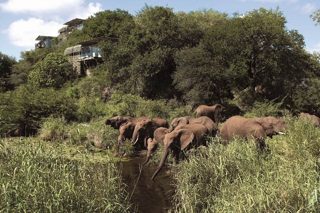 Elephants drinking at SIngita Lebombo
