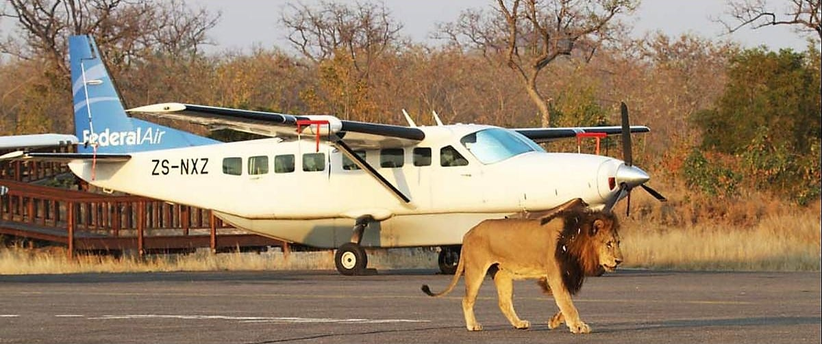 Lion at MalaMala airstrip