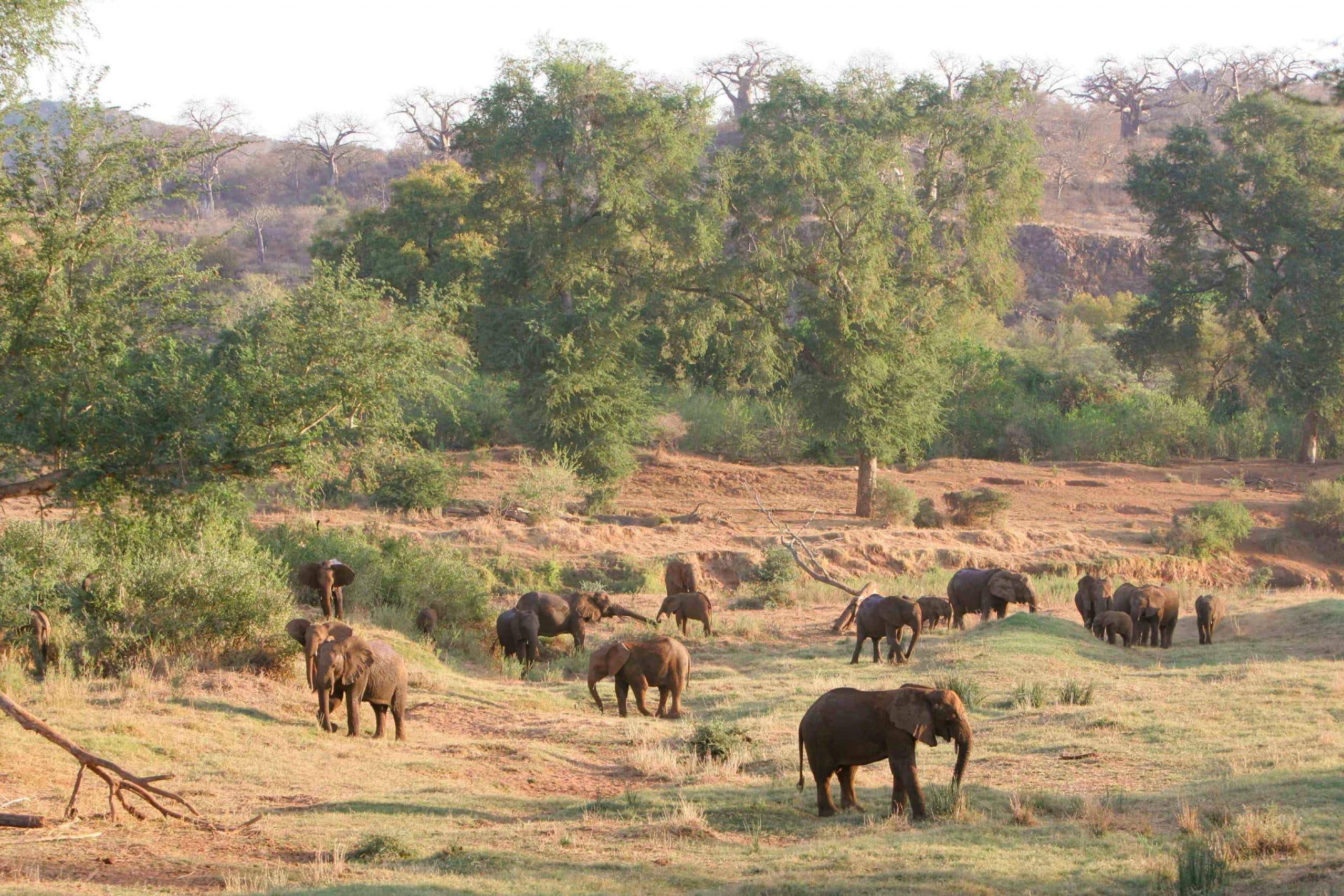 Makuleke elephant herd, Simon Stobbs
