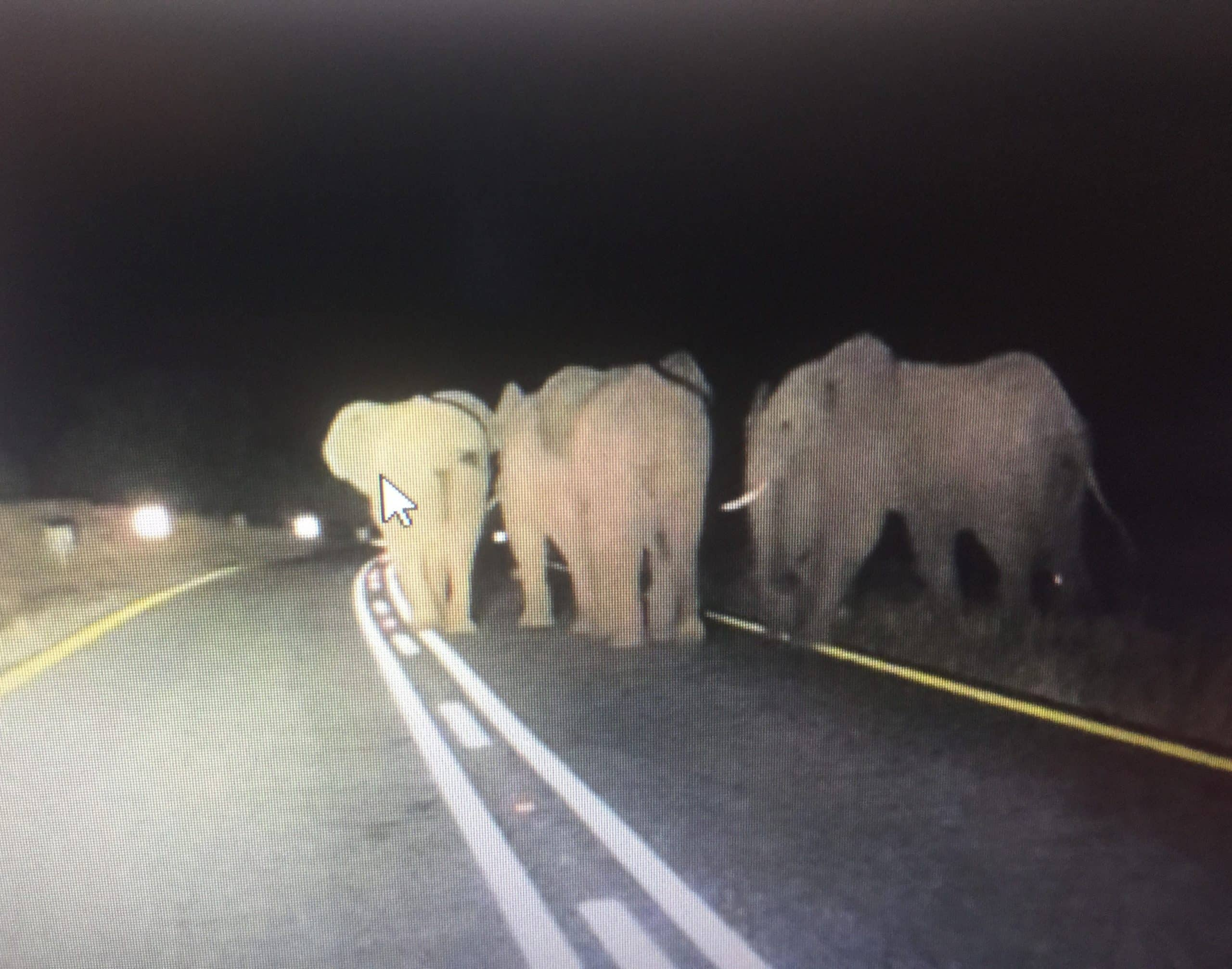Elephants on R40 main road near Balule at night