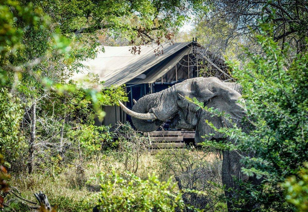 Elephant visiting Khoka Moya tent