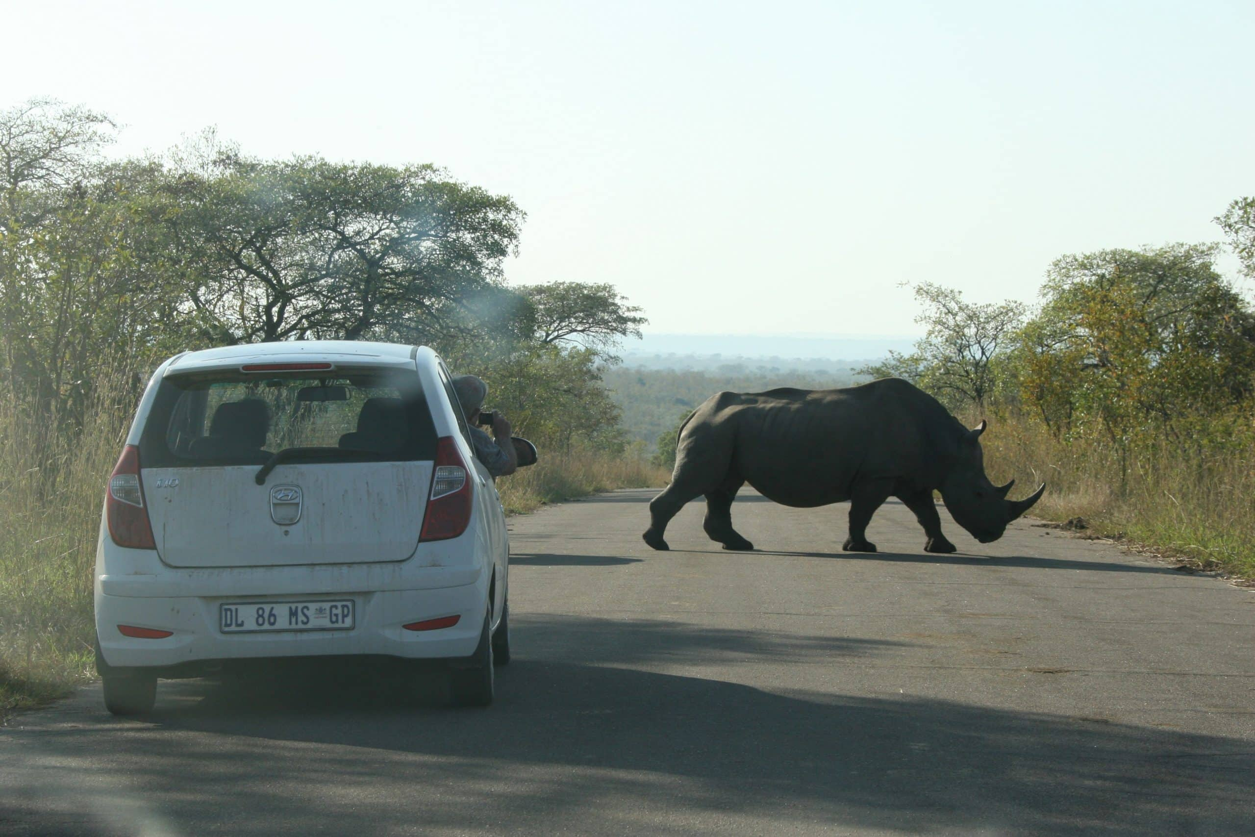 Rhino the the road