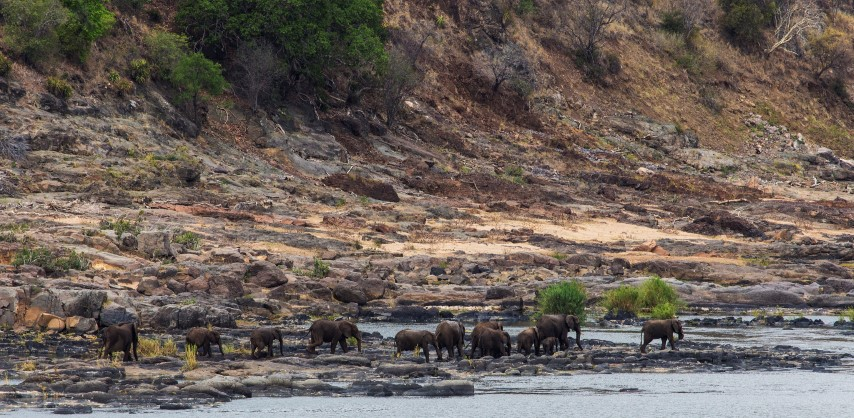 Olifants river elephant herd, sheldrickfalls