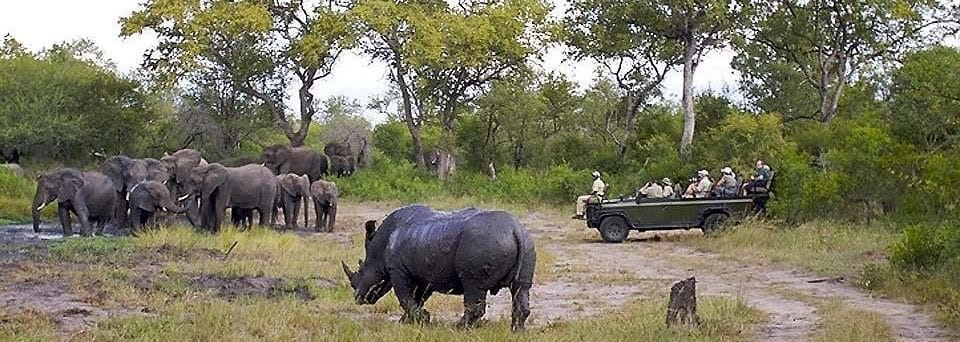 Rhino and elephant at private Kruger waterhole