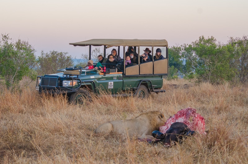Game drive from Shishangeni