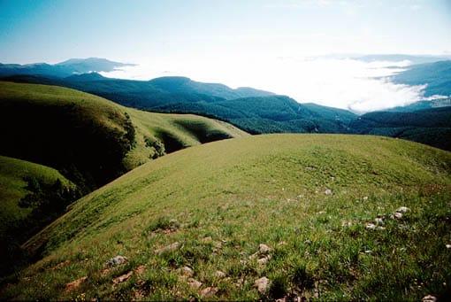 Kruger's grassland biome