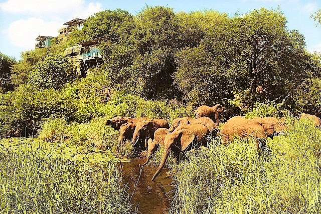 Elephants gather under Singita Lebombo